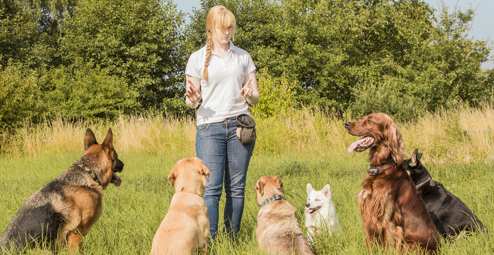 5 FREE Ways to Generate New Dog Training Clients