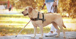 misconceptions about service dogs