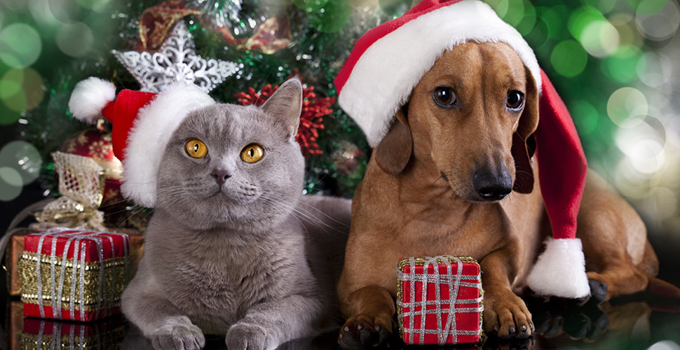 5 Gifts To Get For the Pet Lover in Your Life