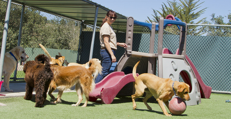 Dog boarding – Know the Choices You Can Make