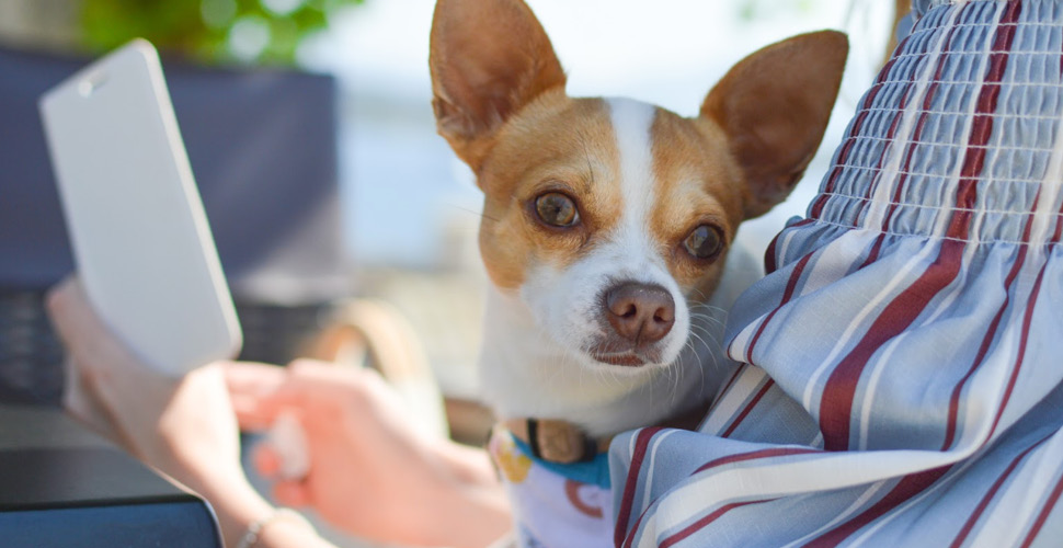 How To Tell Which Boarding Facility Is Right For Your Pet