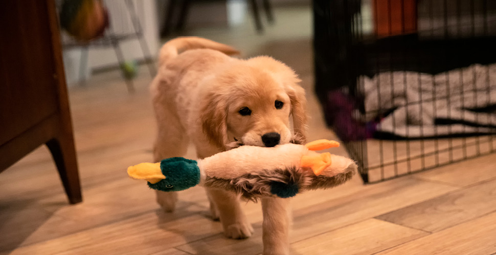 Keeping Your Dog Occupied at Home During Quarantine
