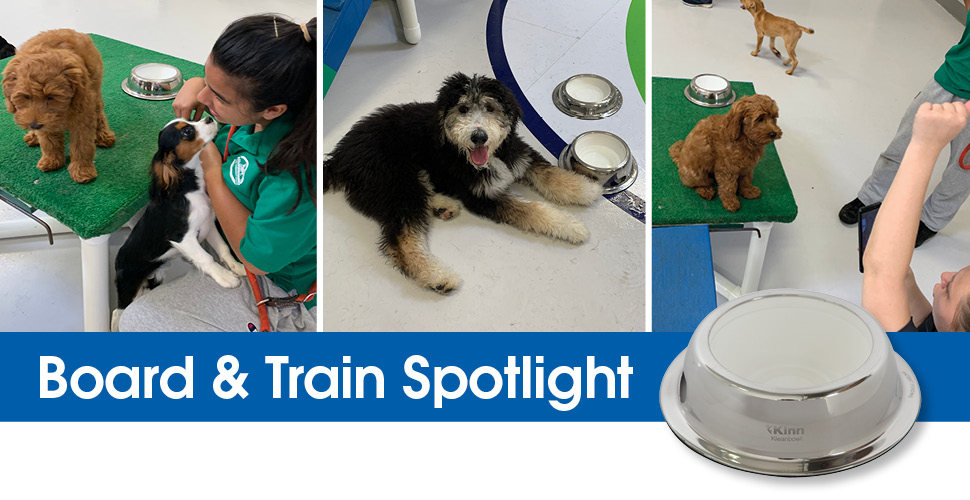 Is a Board & Train Program Right for Your Petcare Facility?